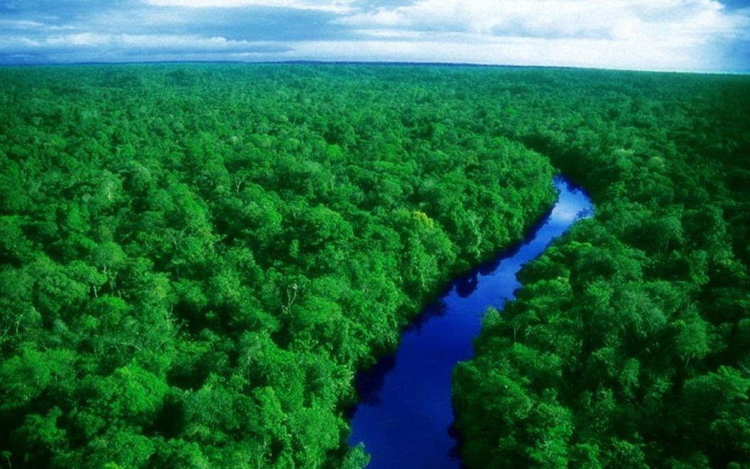 Amazônia legal preservada ou violada?   Por Dilmar Isidoro