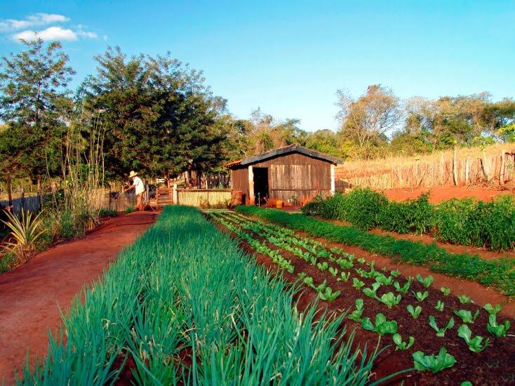 Reforma agrária: assentamentos legais e ocupações irregulares | Por Dilmar Isidoro