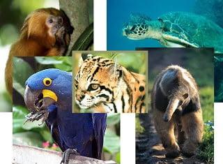 Preservação Ambiental: mais ações e menos discursos | Por Dilmar Isidoro
