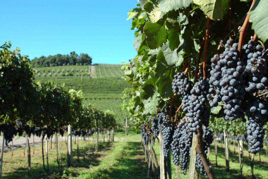 Bento Jazz & Wine Festival movimentará a Serra Gaúcha em março