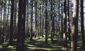 Florestas plantadas ganham visibilidade com setor em alta no Brasil
