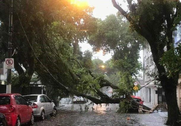 Descasos na manutenção de árvores urbanas causam riscos à coletividade | Por Dilmar Isidoro