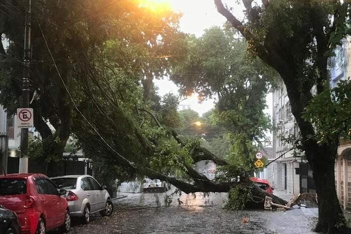 Descasos na manutenção de árvores urbanas causam riscos à coletividade   Por Dilmar Isidoro