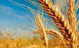 Alta nas cotações do trigo pressiona preços dos derivados