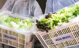 Campanha Pomar Solidário: ajude a complementar as refeições de quem precisa com o excedente de sua horta ou pomar